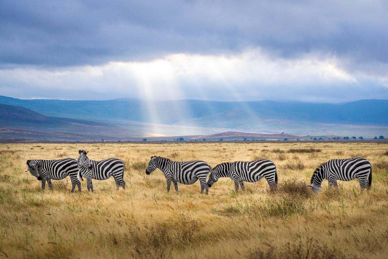 Regenzeit Kenia